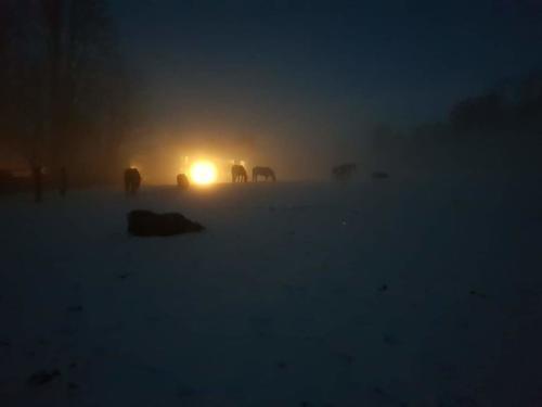 Nachtweide im Winter